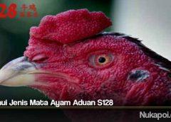 Ketahui Jenis Mata Ayam Aduan S128